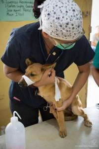 Antigua Street Dogs Association @ Rainbow Café Antigua Guatemala | Antigua Guatemala | Sacatepéquez | Guatemala